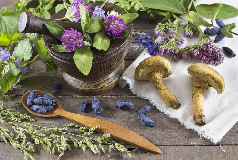 Mushrooms, herbs and flowers on table
