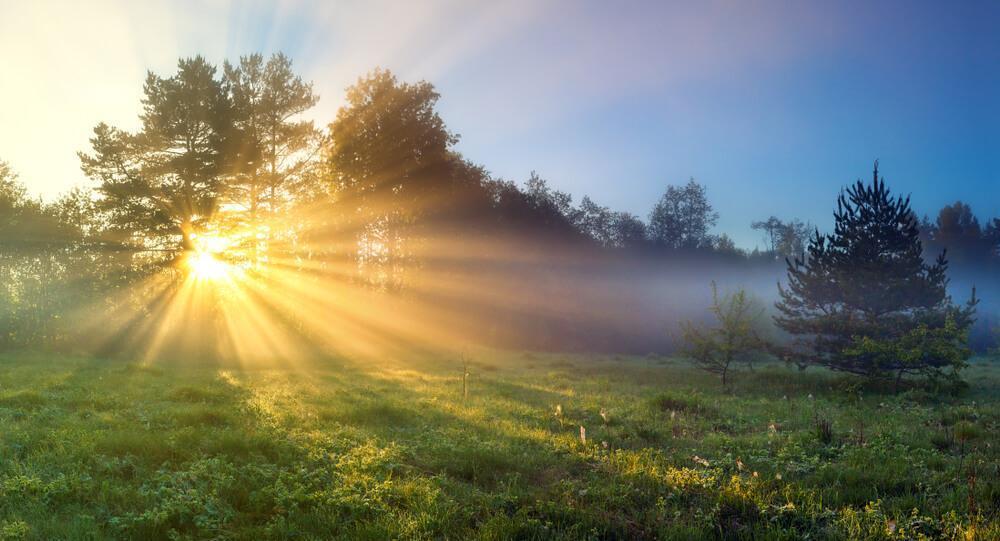 Sun in meadow